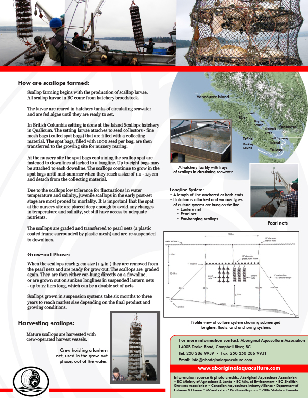 AAA Scallop Fact Sheet Final - pg2.jpg