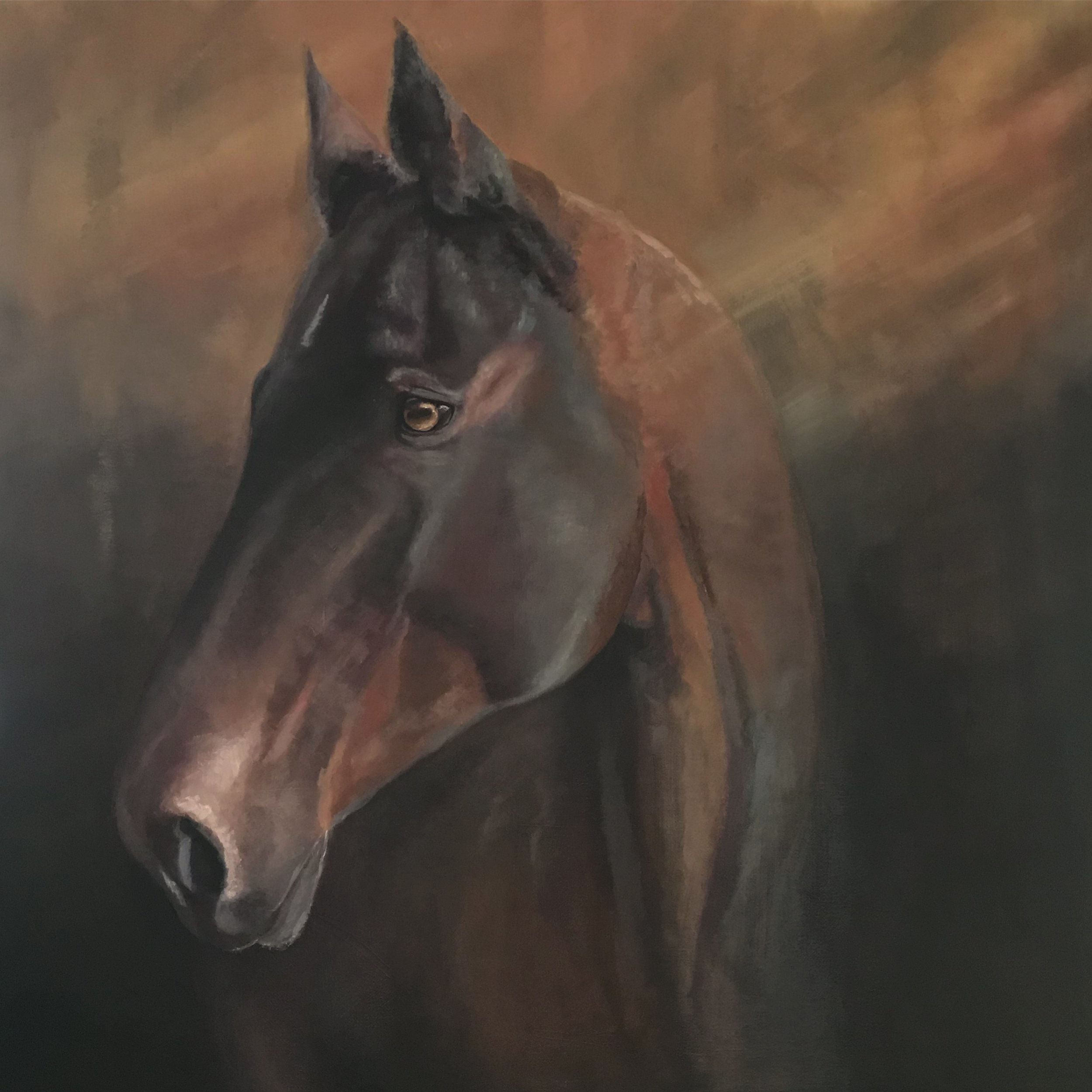 """Desperado""  24 x 24 inch, oil on canvas.   SOLD"
