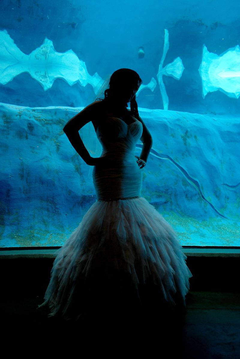 Detroit Zoo Bride