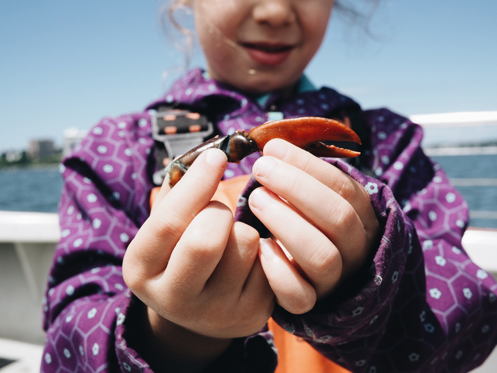 {No lobsters, but one little girl was so excited to find a claw!}