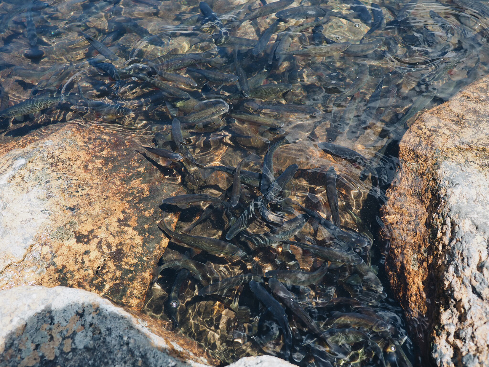 {So many fish at the pond.}