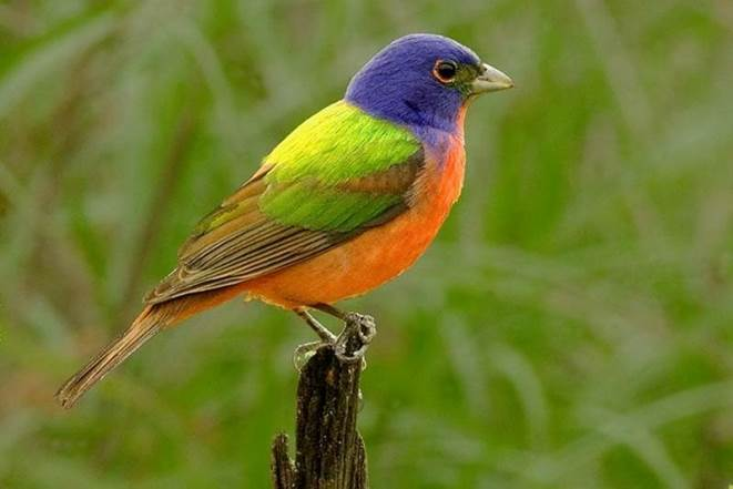 We can identify a Painted Bunting by his color, size, and sound. How are Christians identified?