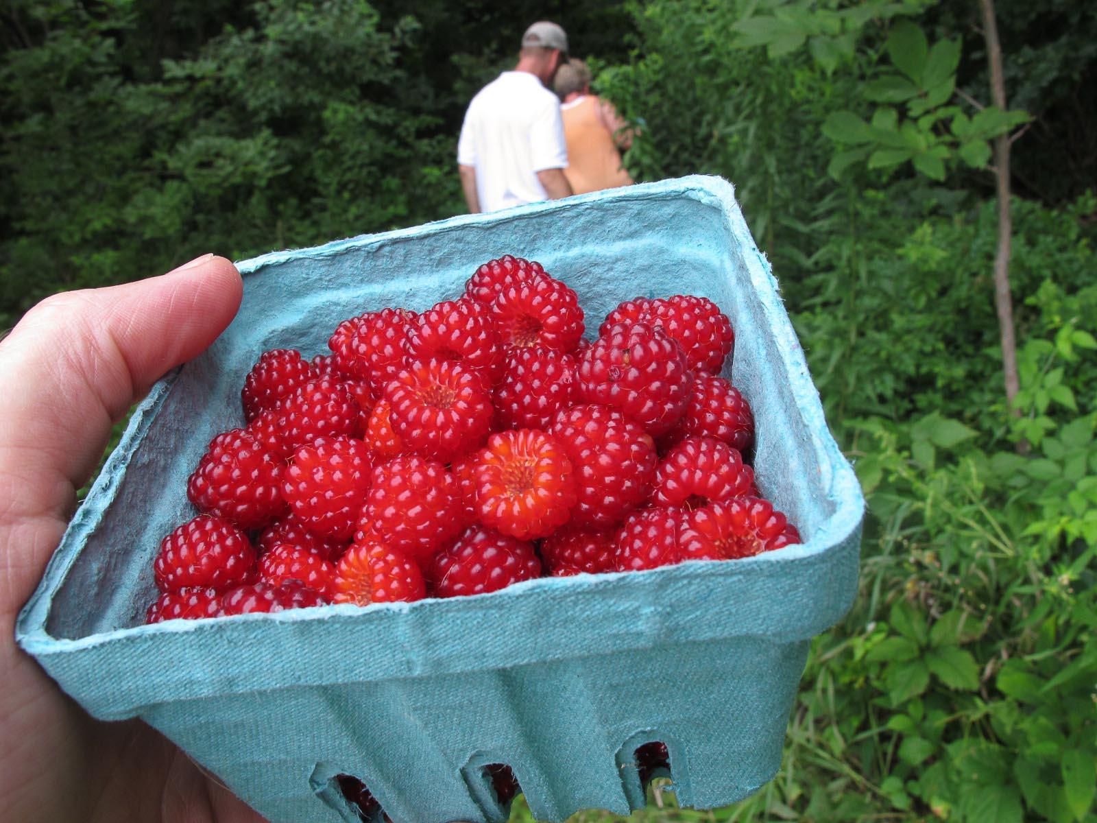 wineberries-2.jpg