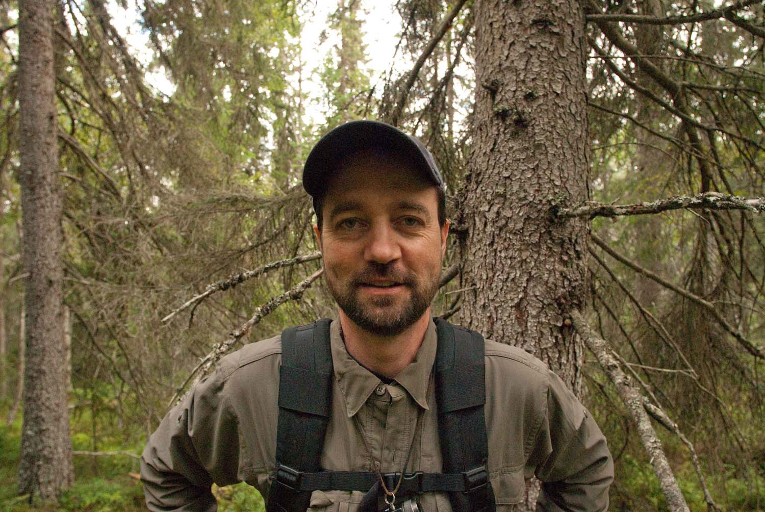 On assignment in Sweden's old growth forests