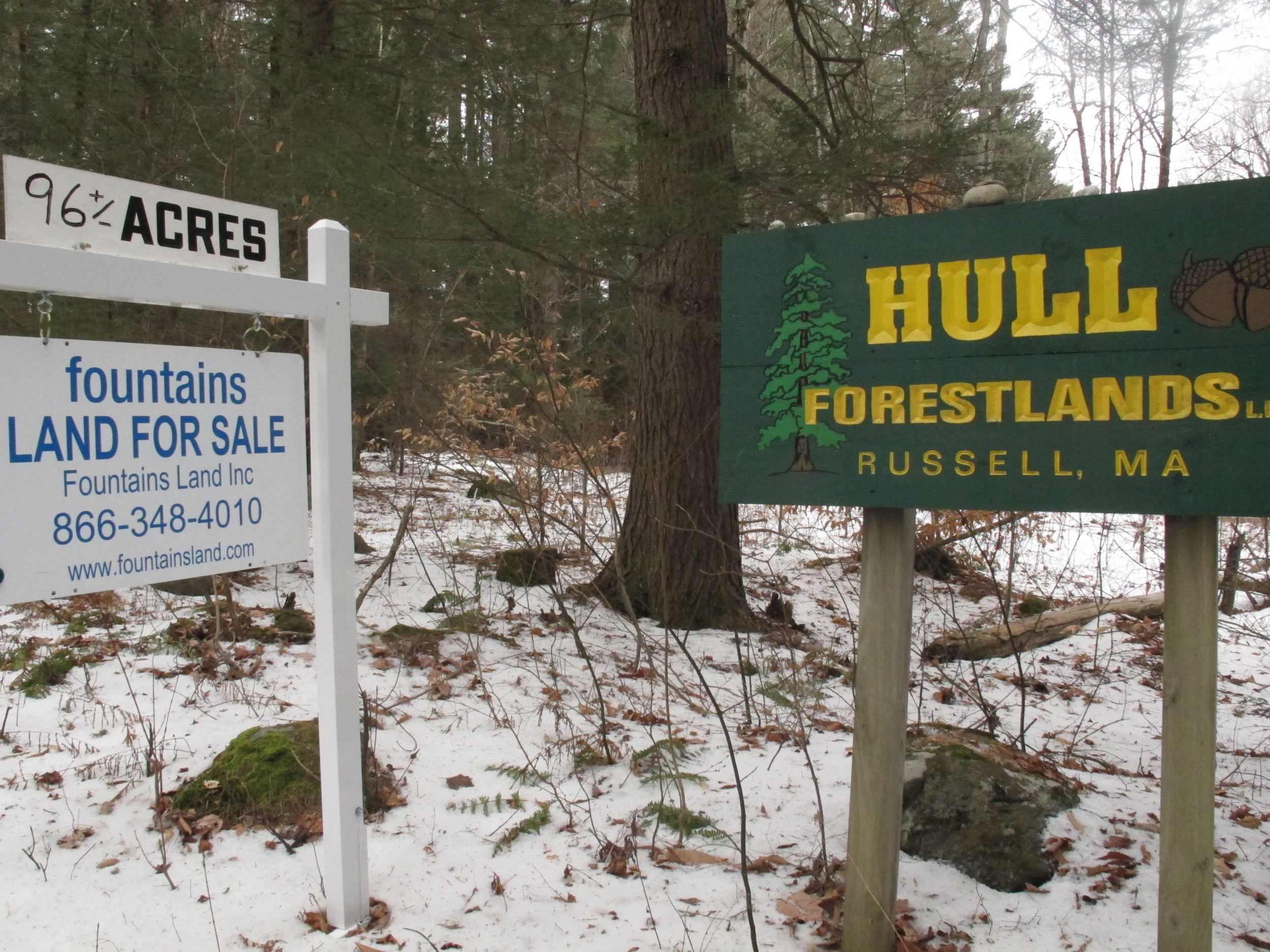 The small old-growth tract is a couple hundred feet behind these signs on Sears Road