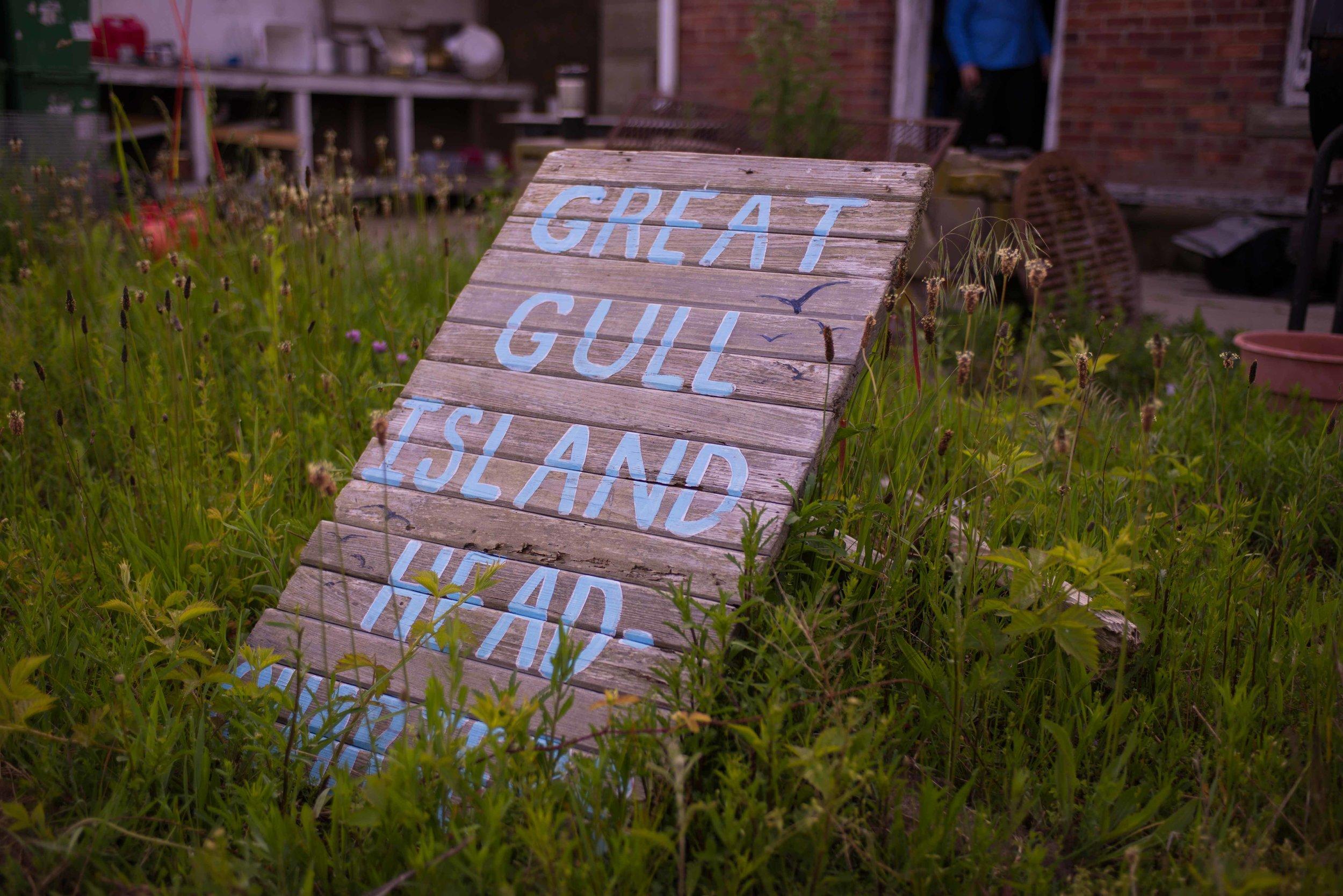 great gull-3.jpg