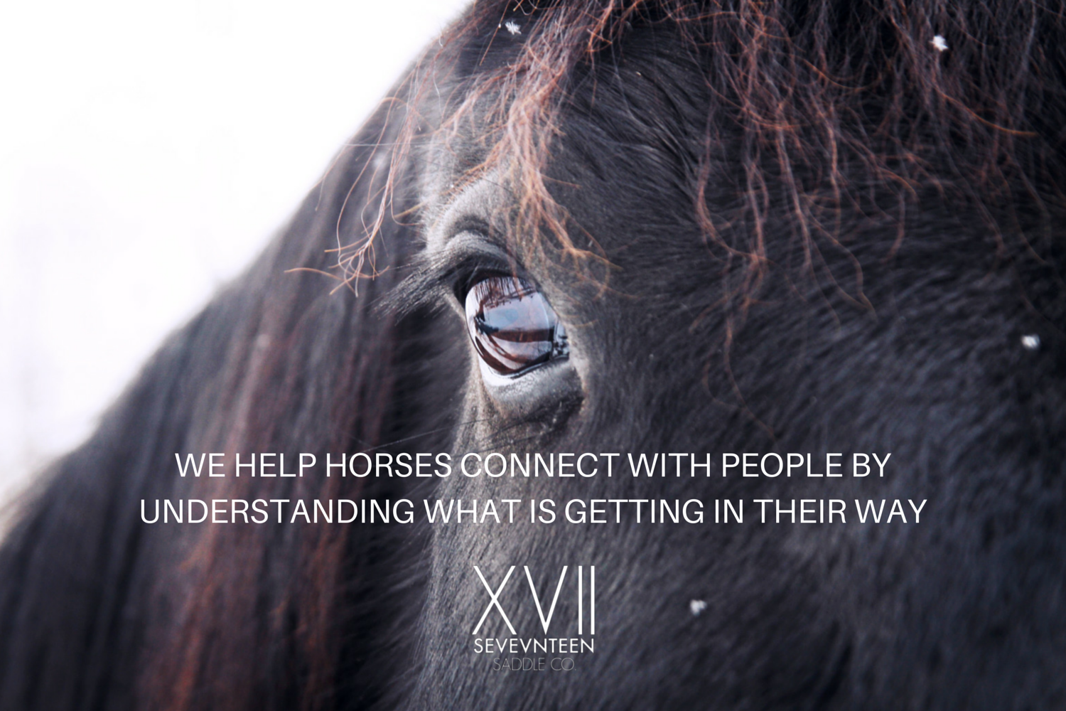 WE HELP HORSES CONNECT WITH PEOPLE BY(1).png