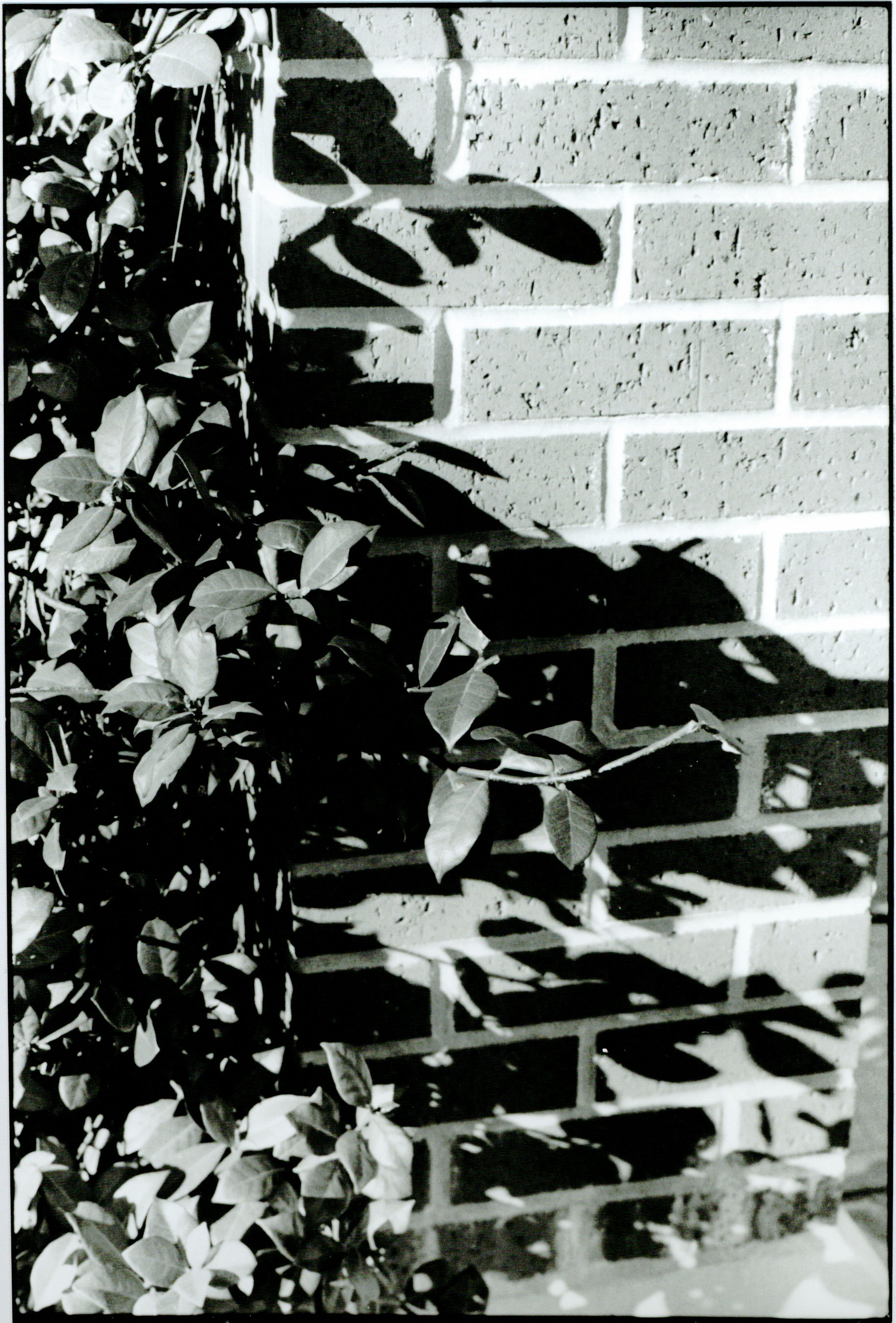 leaves on brick copy.jpg