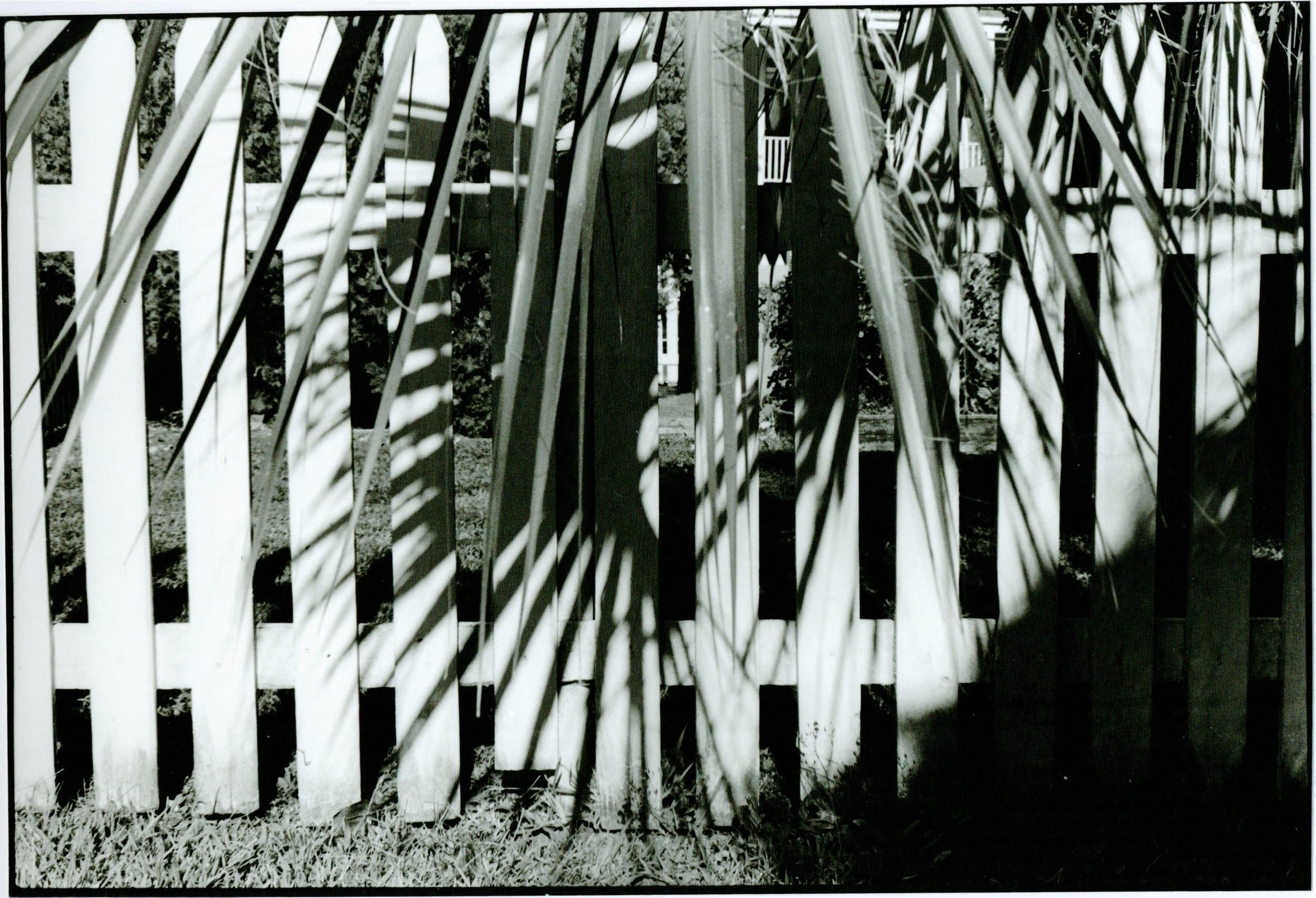 leaves on fence copy.jpg