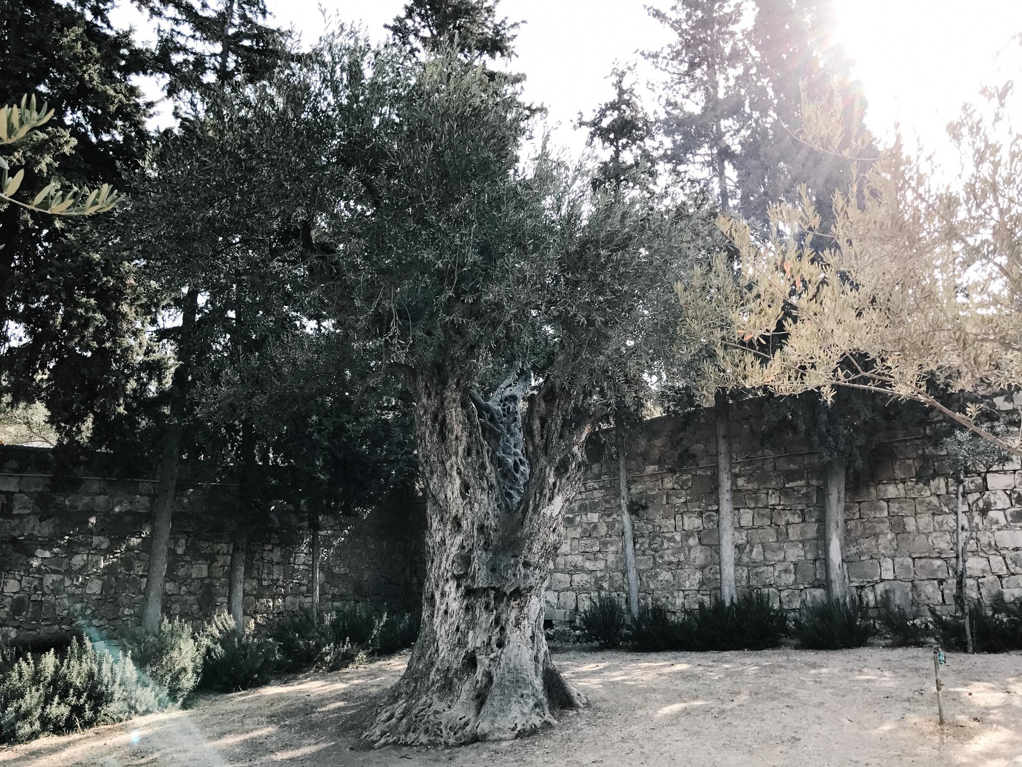 israelblog-59.jpg