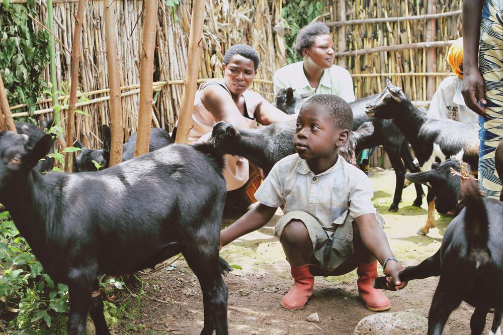 goats7.JPG