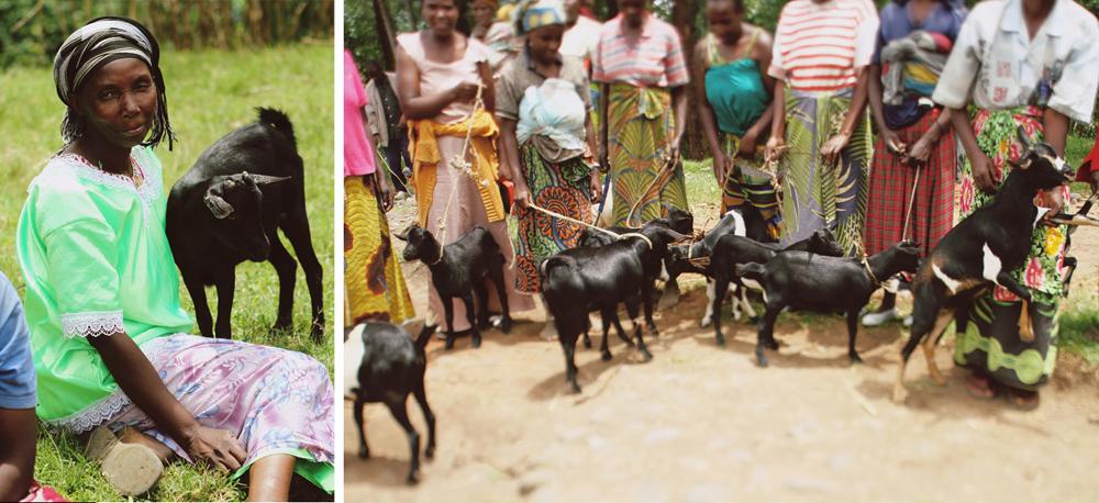 goats11.JPG