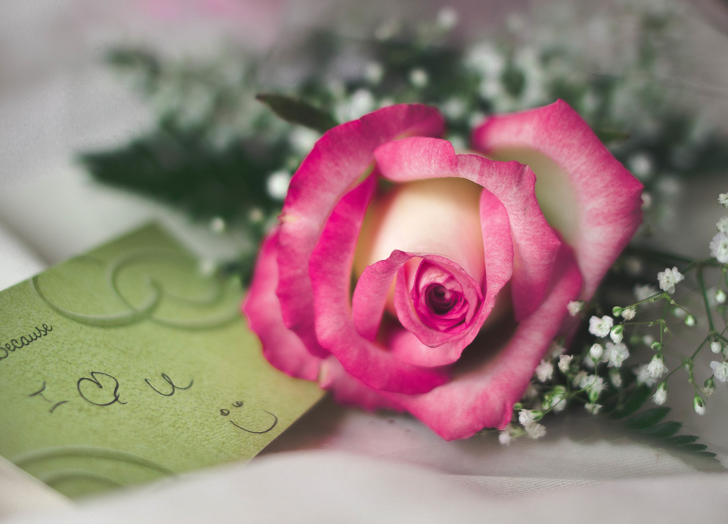 Petals in a Pink Rose | by fit for the soul