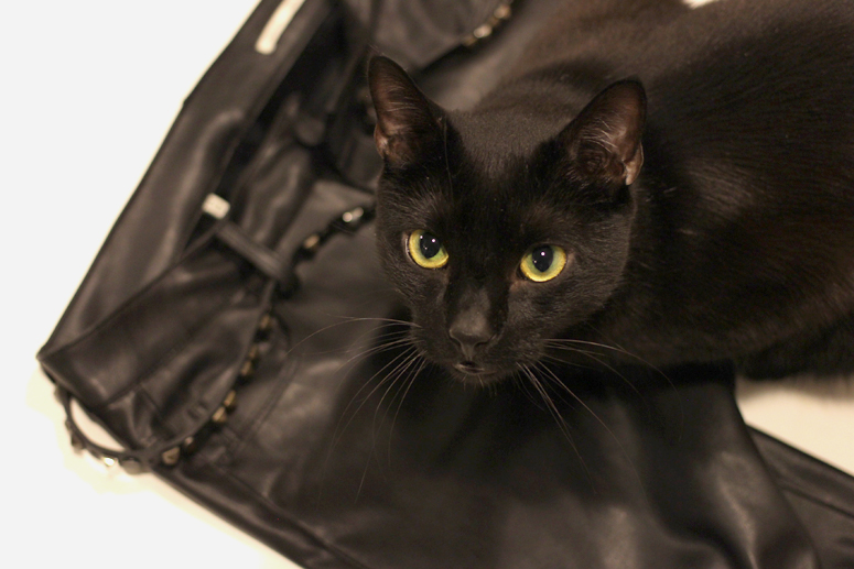 WoahSyle.com | Zara faux leather pants and Marvin the black cat