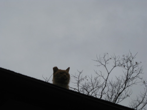 5. The evil shrine roof cat in Kyoto