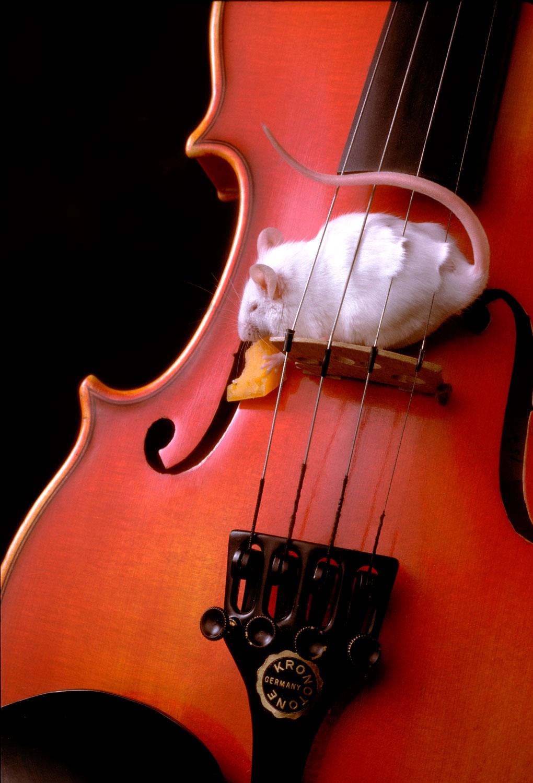 Rick Davis Photographic, Philadelphia, Still Life, Photography, Still Life Photography, Mouse, Violin