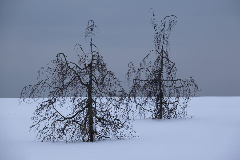 snow blind_0343 flak copy.jpg