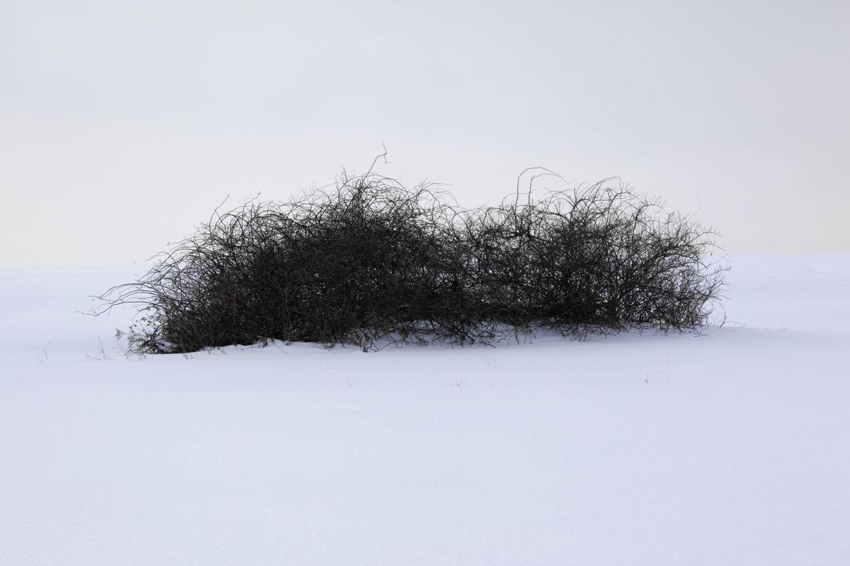 snow blind_0388 flak.jpg