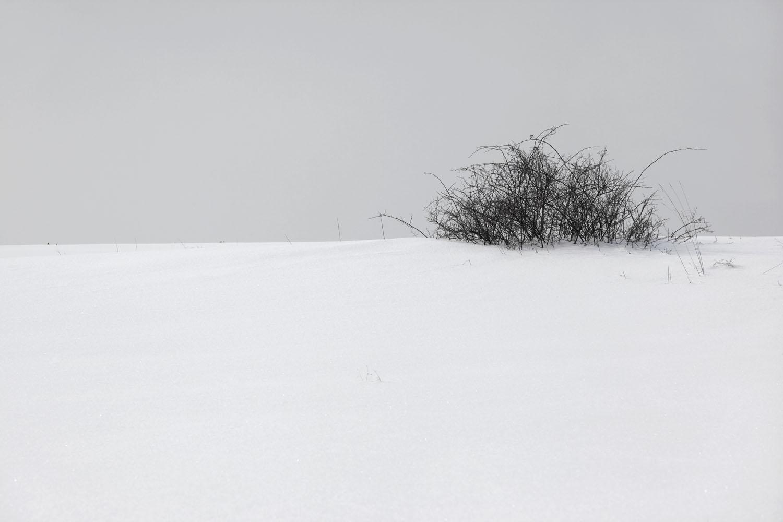 snow_0462 flak copy.jpg