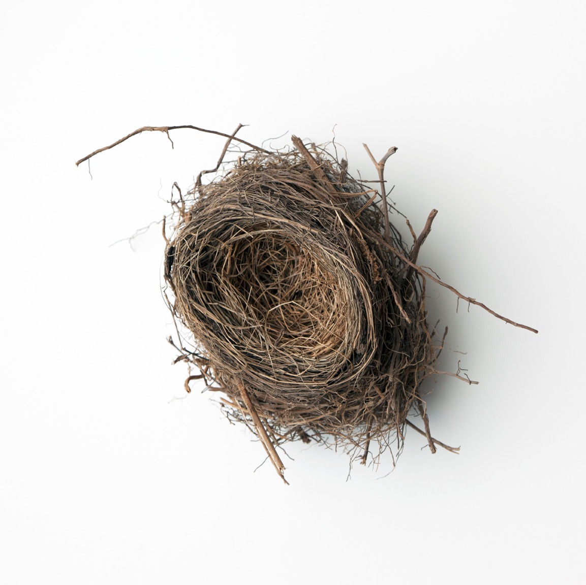 Nest-2543 copy.jpg
