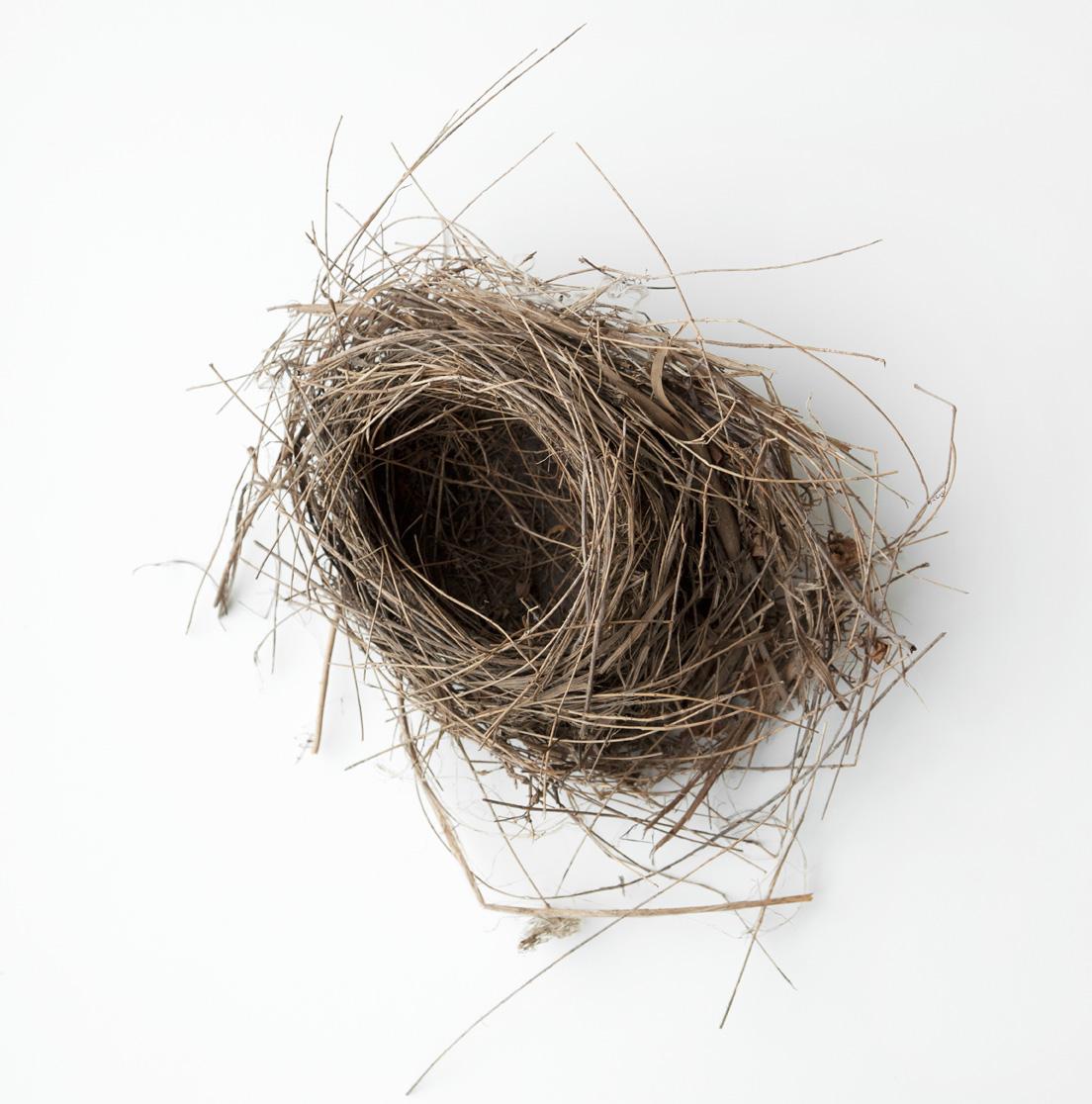 Nest-2569 copy.jpg