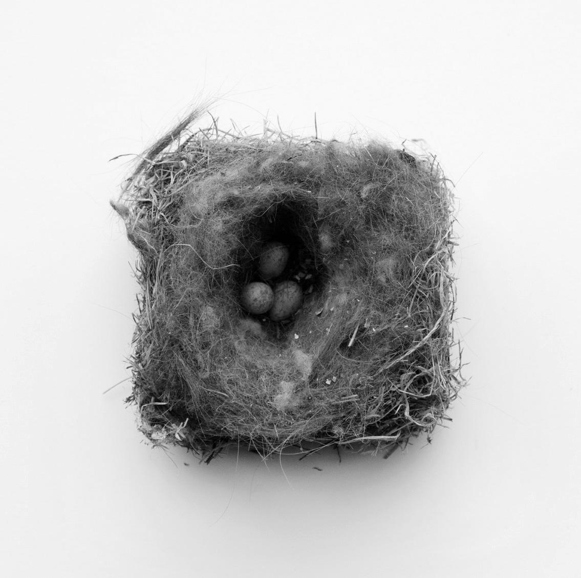 Nest-2654 copy.jpg