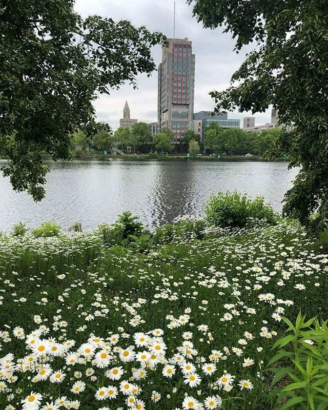 Almost Summer #boston #7milerun #summervibes #colorinspiration #summercolors #colors #daisies #beautyintheeyeofthebeholder #madeinnewengland #bostonmade
