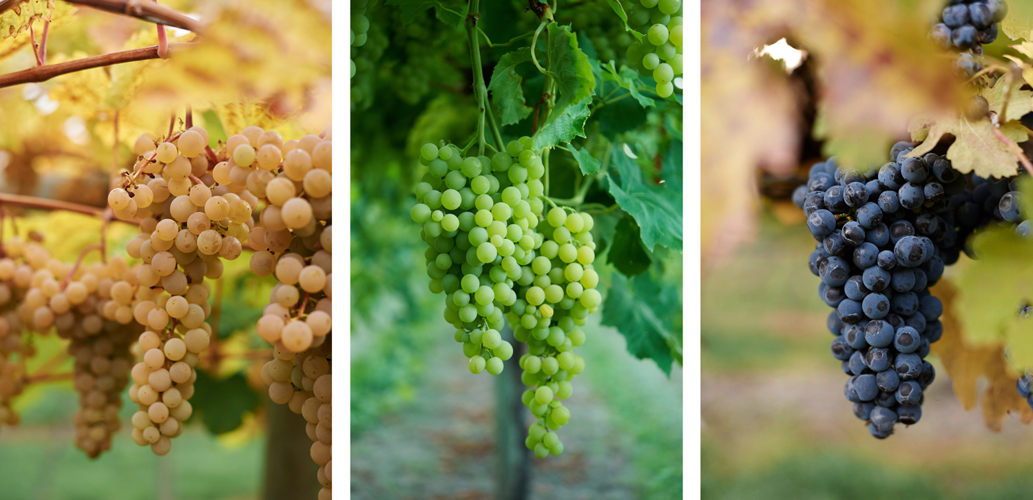 Grapes Triptych.jpg