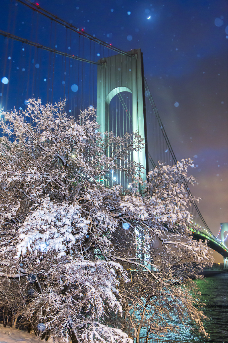 The Verrazano Bridge Series