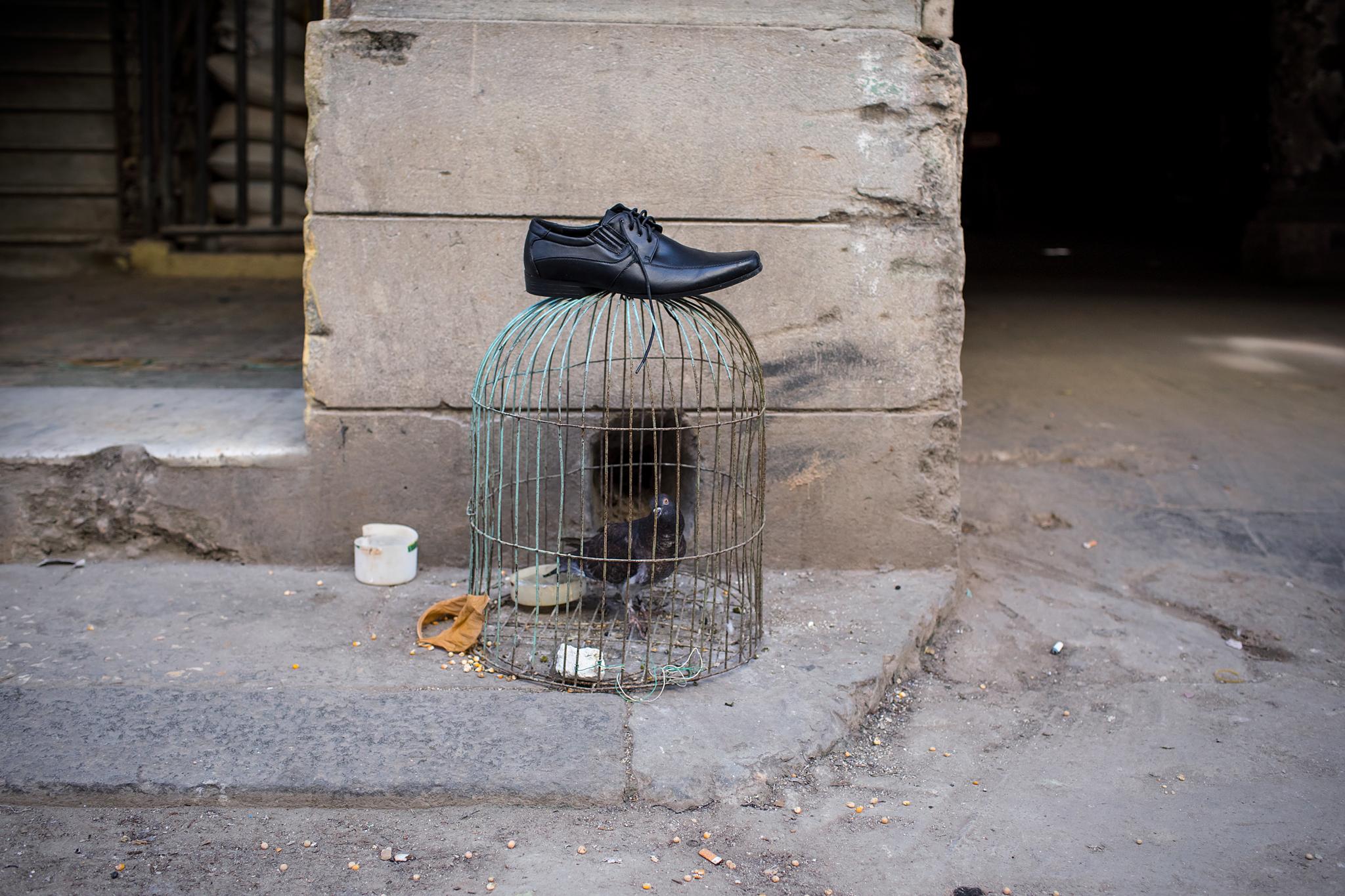 fb.cc.3.29.2017.Birdcage_W_Shoe_Havana_Cuba_K9A5995.jpg