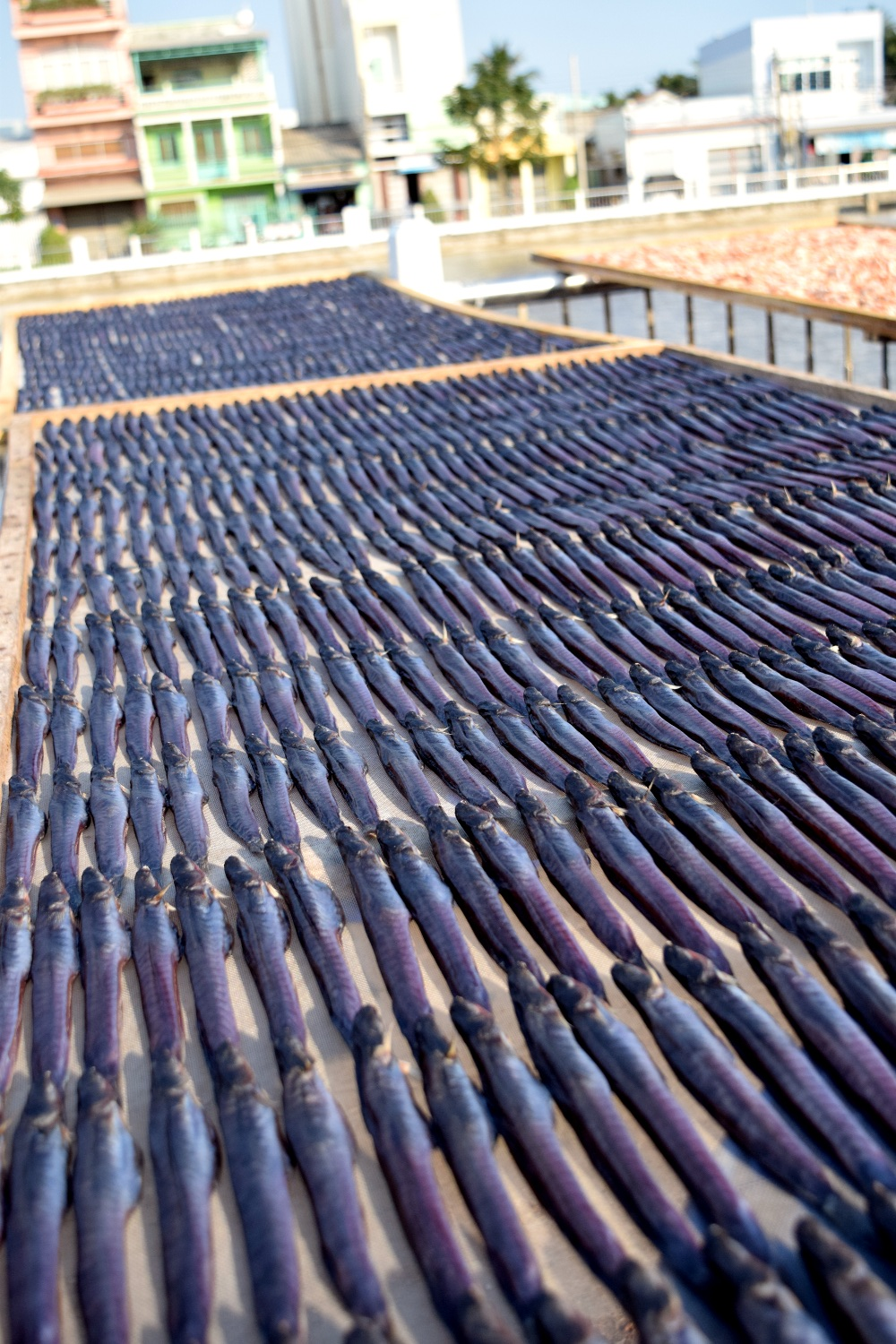 Fresh fish in Tra Vinh