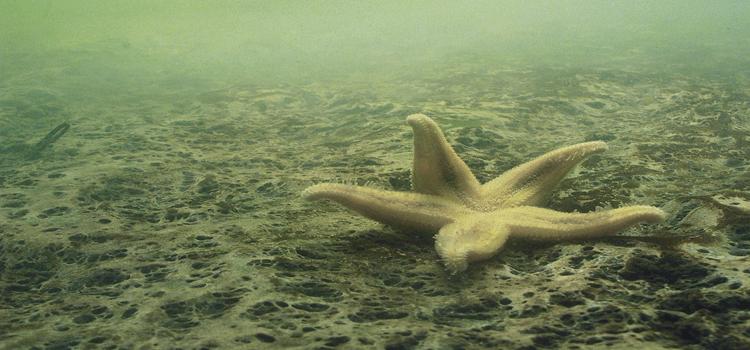 Ocean dead zones. Dead fish.