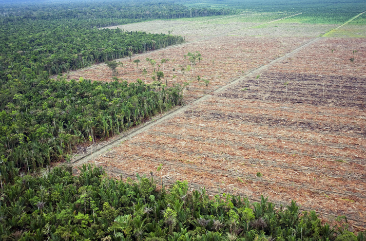 Deforestation Amazon Rainforest Brazil. Animal agriculture, cows, deforestation.