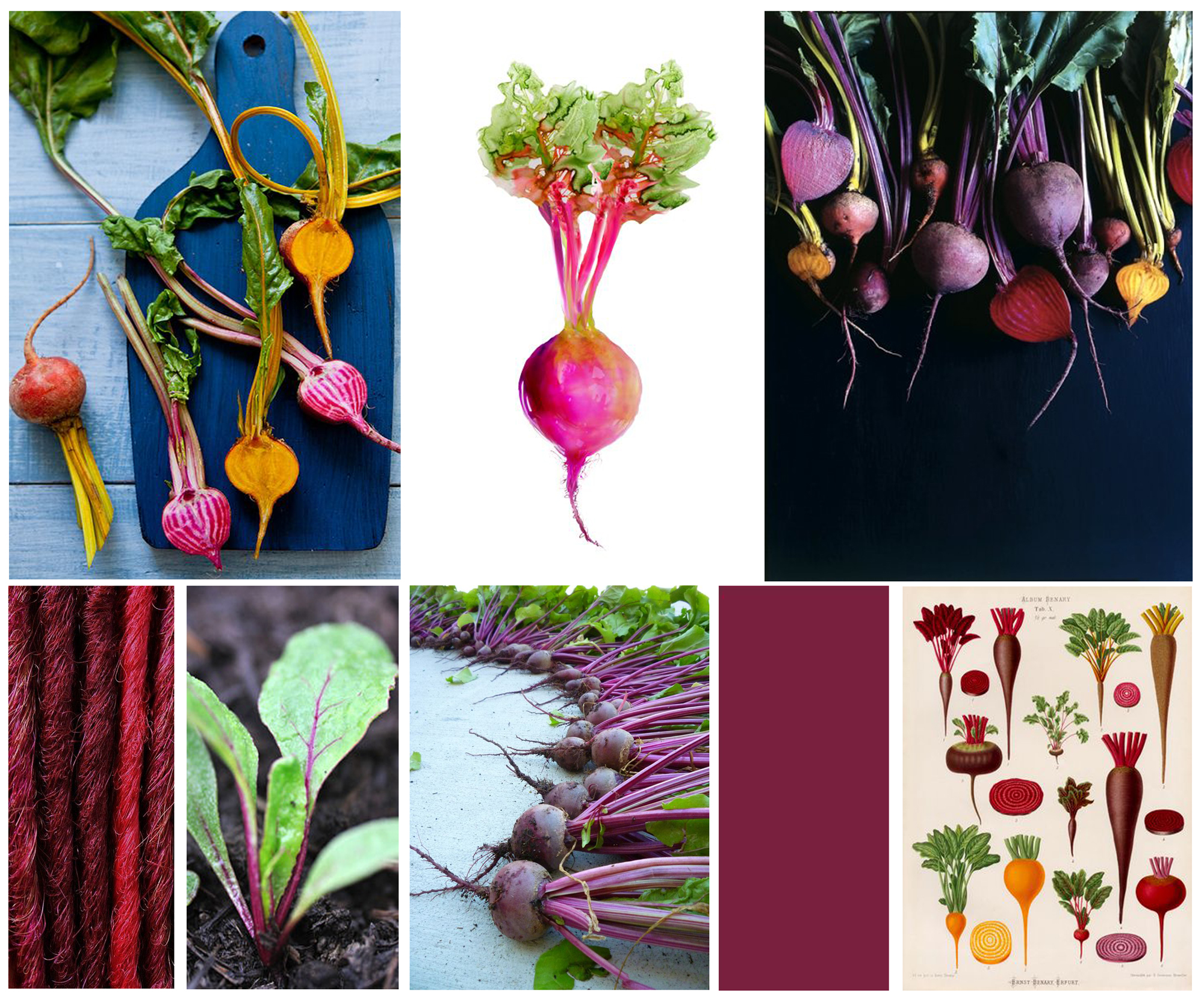 Beets moodboard inspiration beet color beet red fayelessler.com