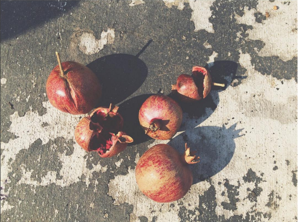 Fallen pomegranates foraged for a dyebath. Image courtesy of Liz Spencer.