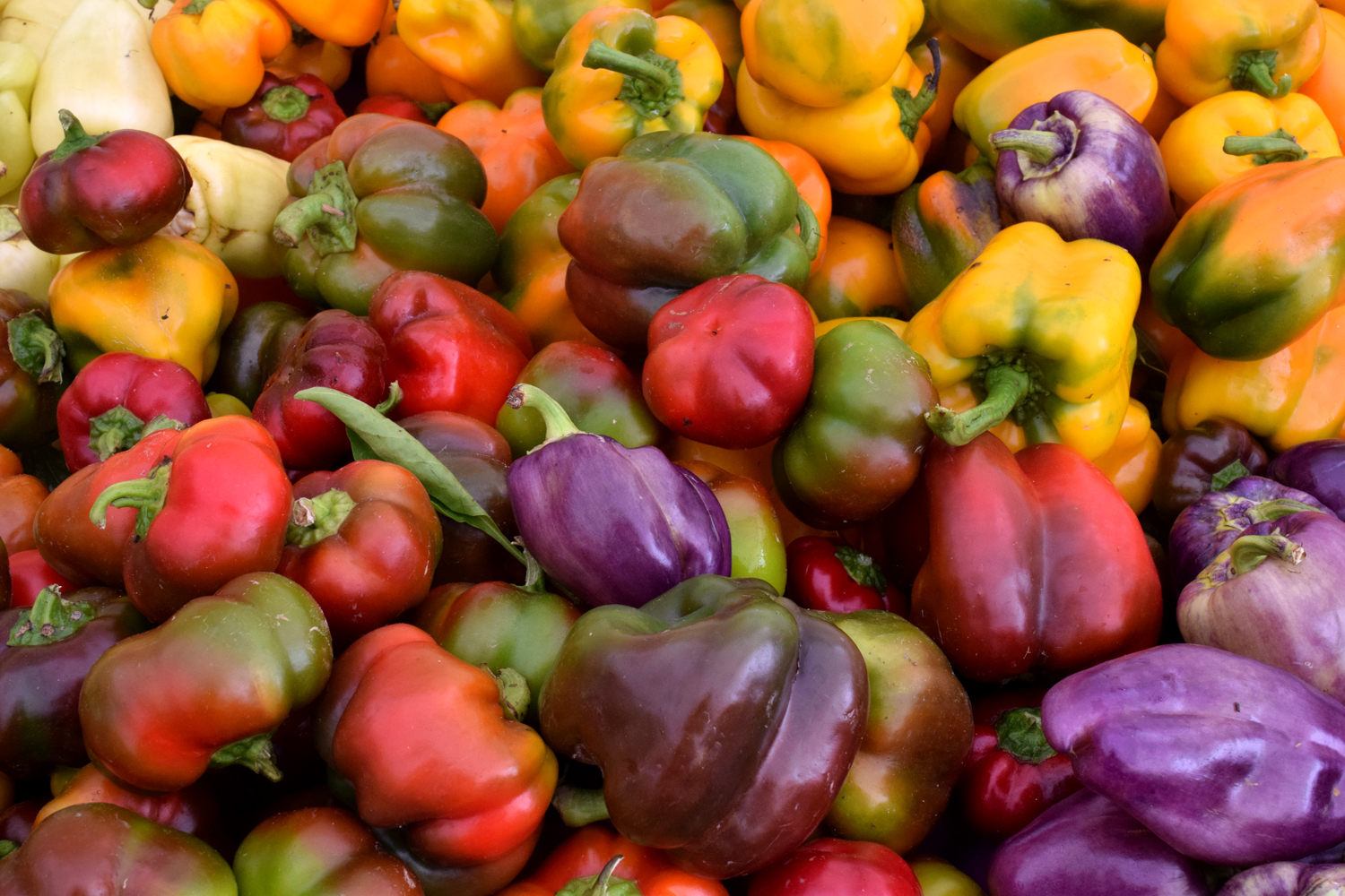Late-Summer goodness at the Union Square Farmer's Market.