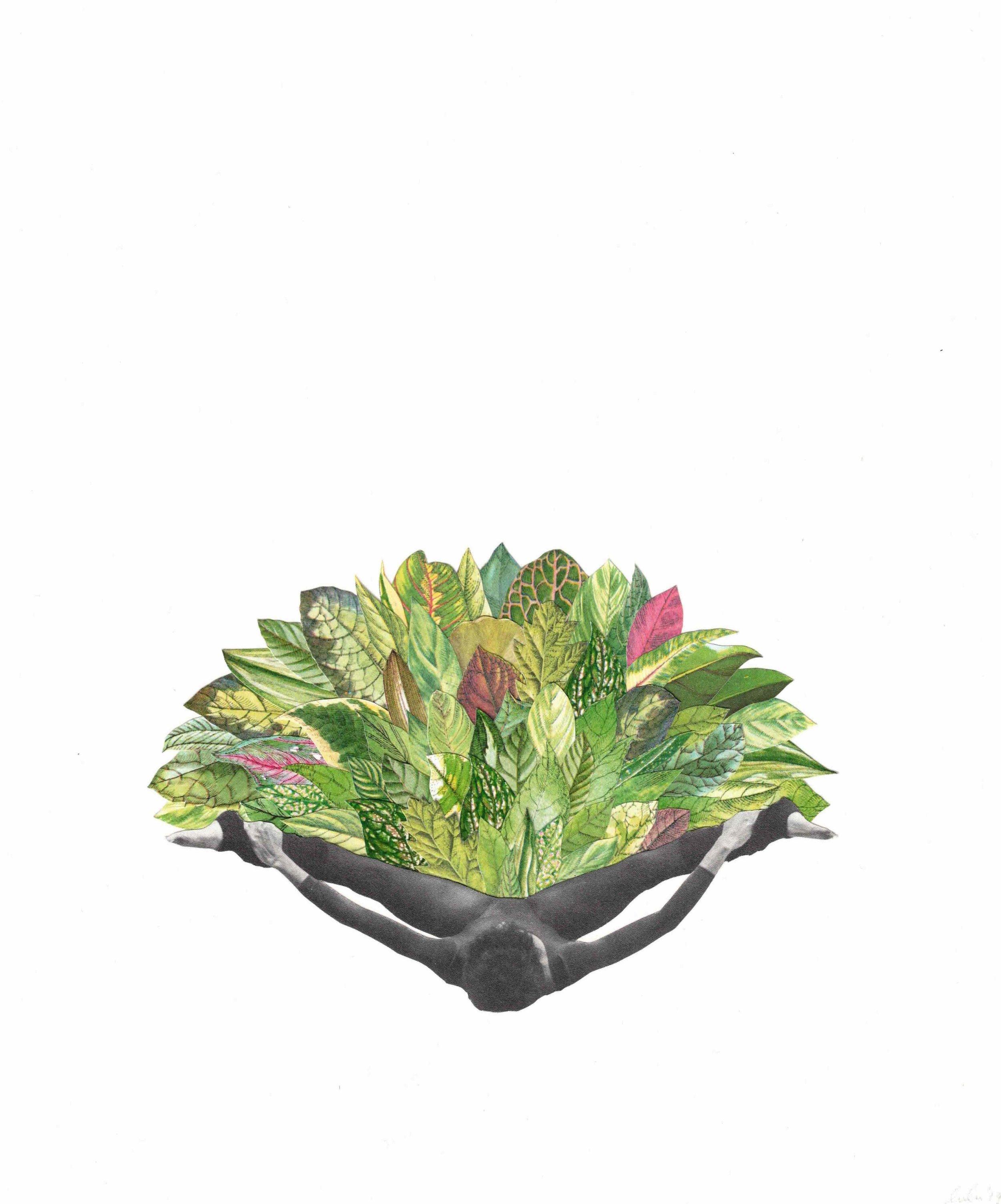 leafy.jpeg