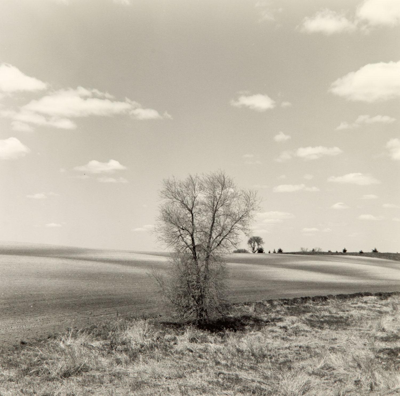 Field in Spring, Western Minnesota