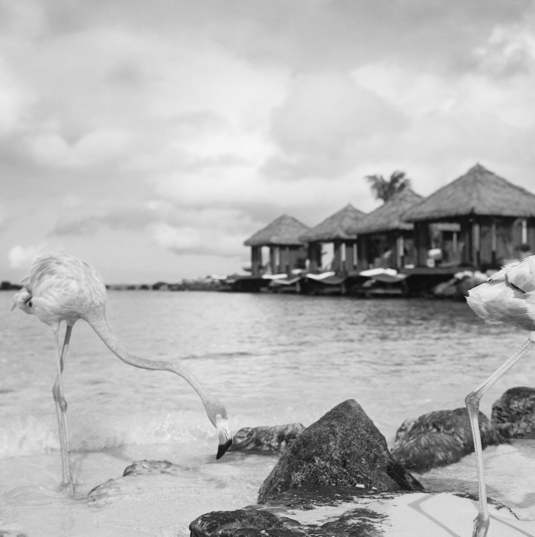 Travel Photography- Film Photography- Aruba- Olivia Christina Photo-8.JPG