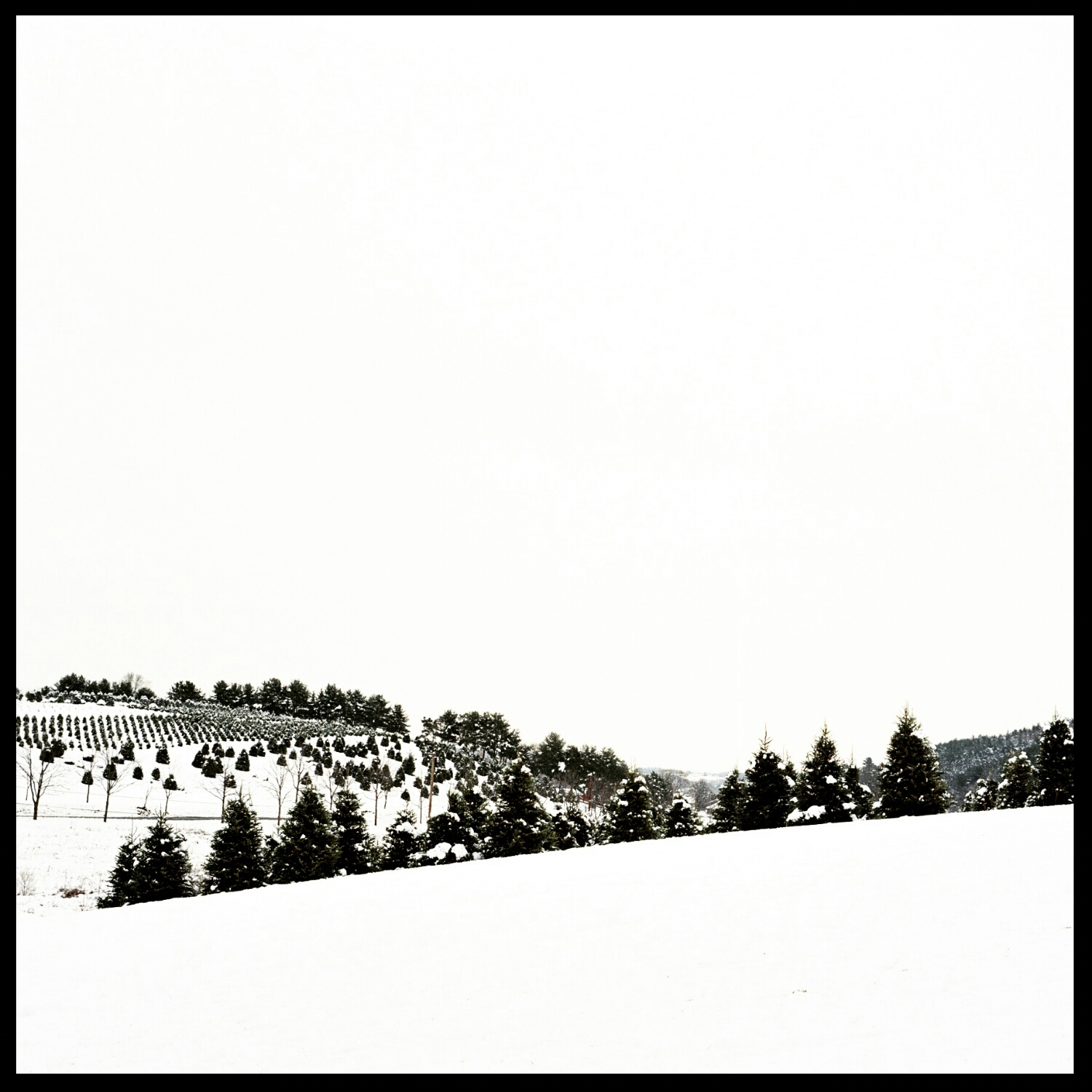 Winter Landscape- Christmas Tree Farm in Snow- Film Photography- Olivia Christina Photo