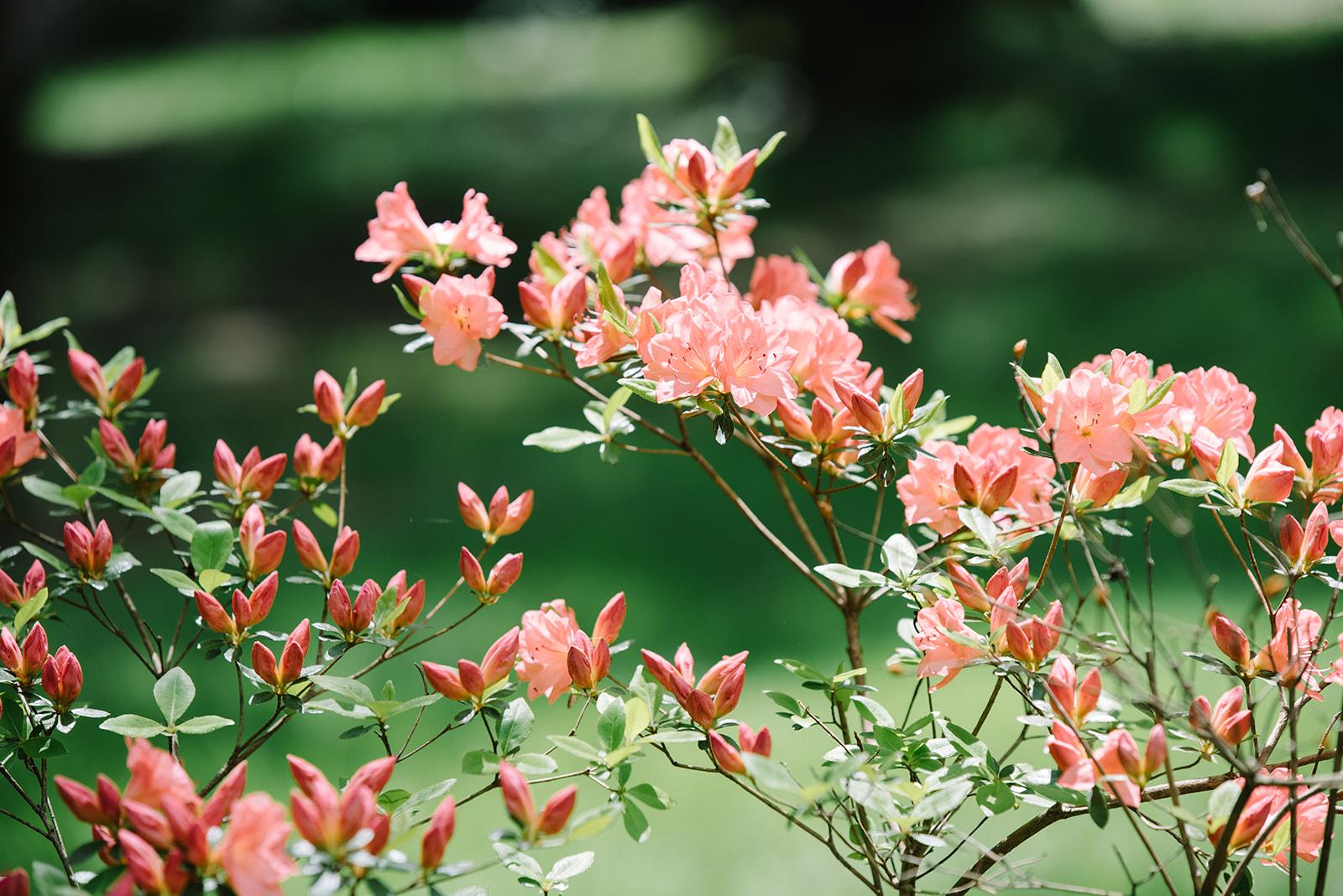 Surprise_Proposal-_NJ_Botanical_Gardens-_Greg_and_Jackie-New_Jersey-_Olivia_Christina_Photo-3.jpg