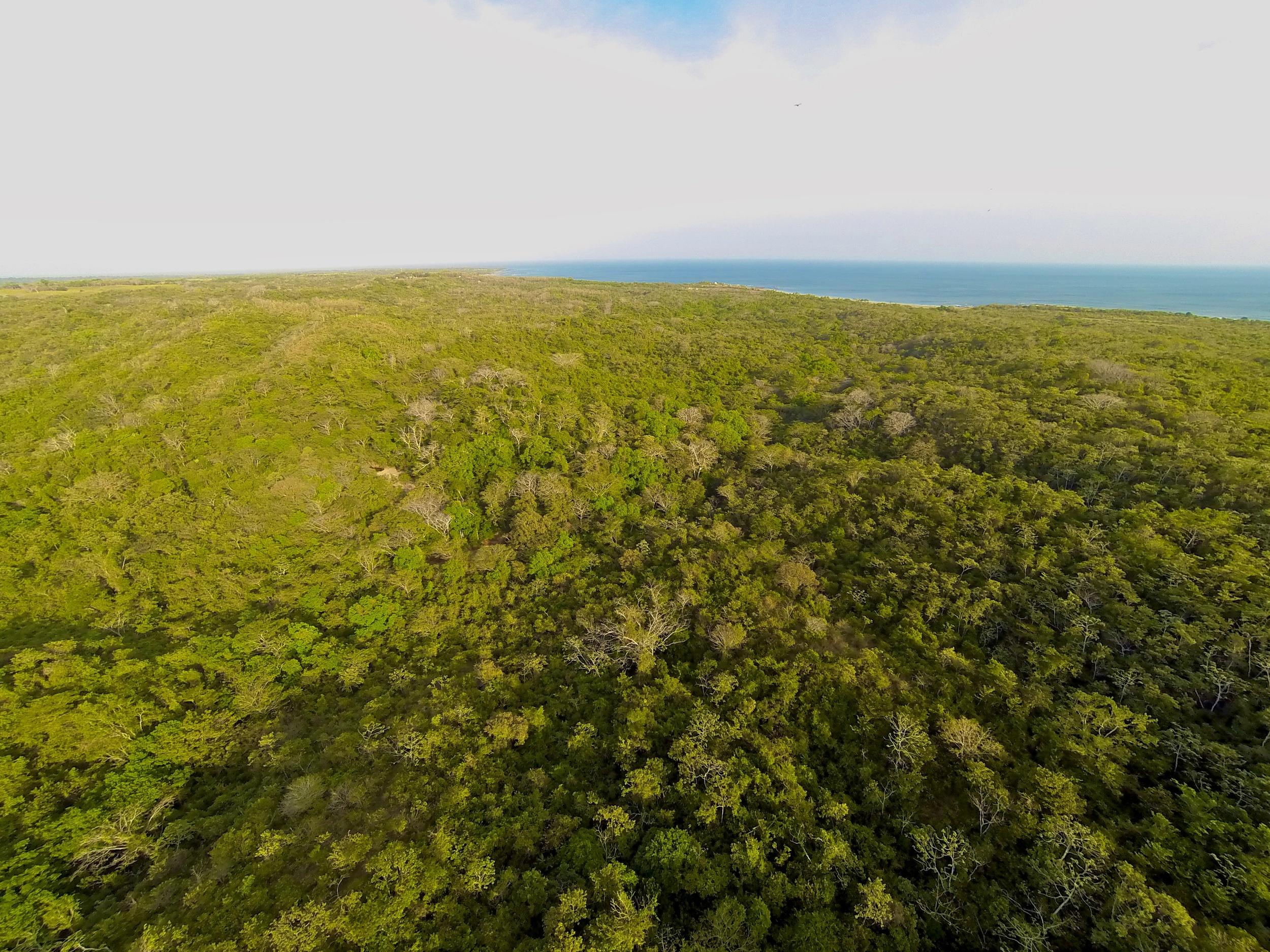 ama - forest.jpg
