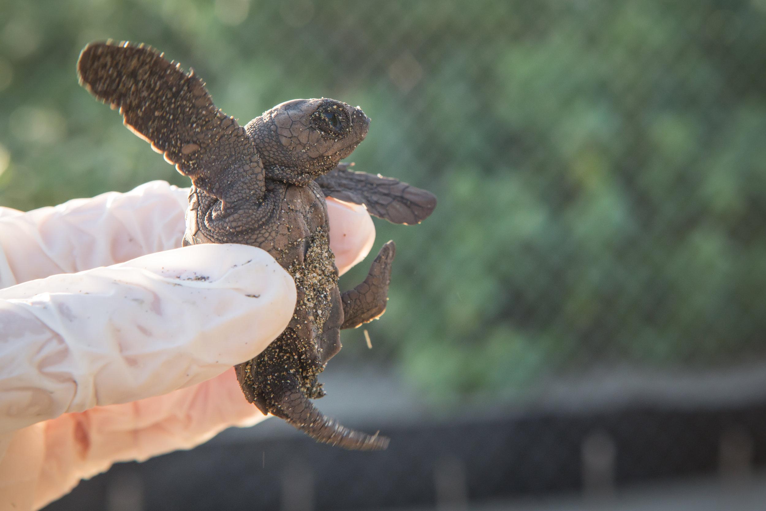 Turtles-17.jpg