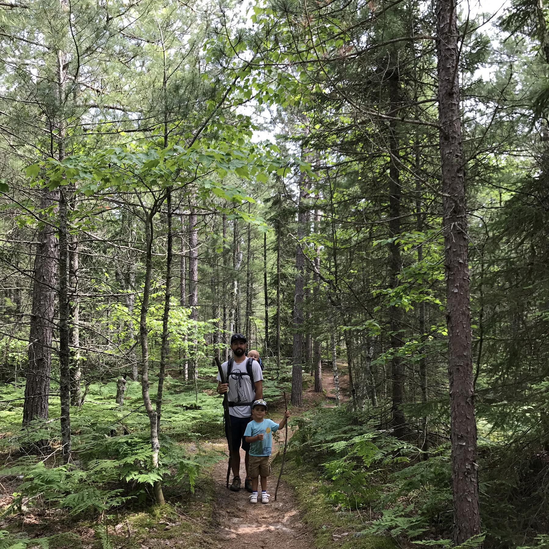 The dense woods of the UP | July | Munising, MI