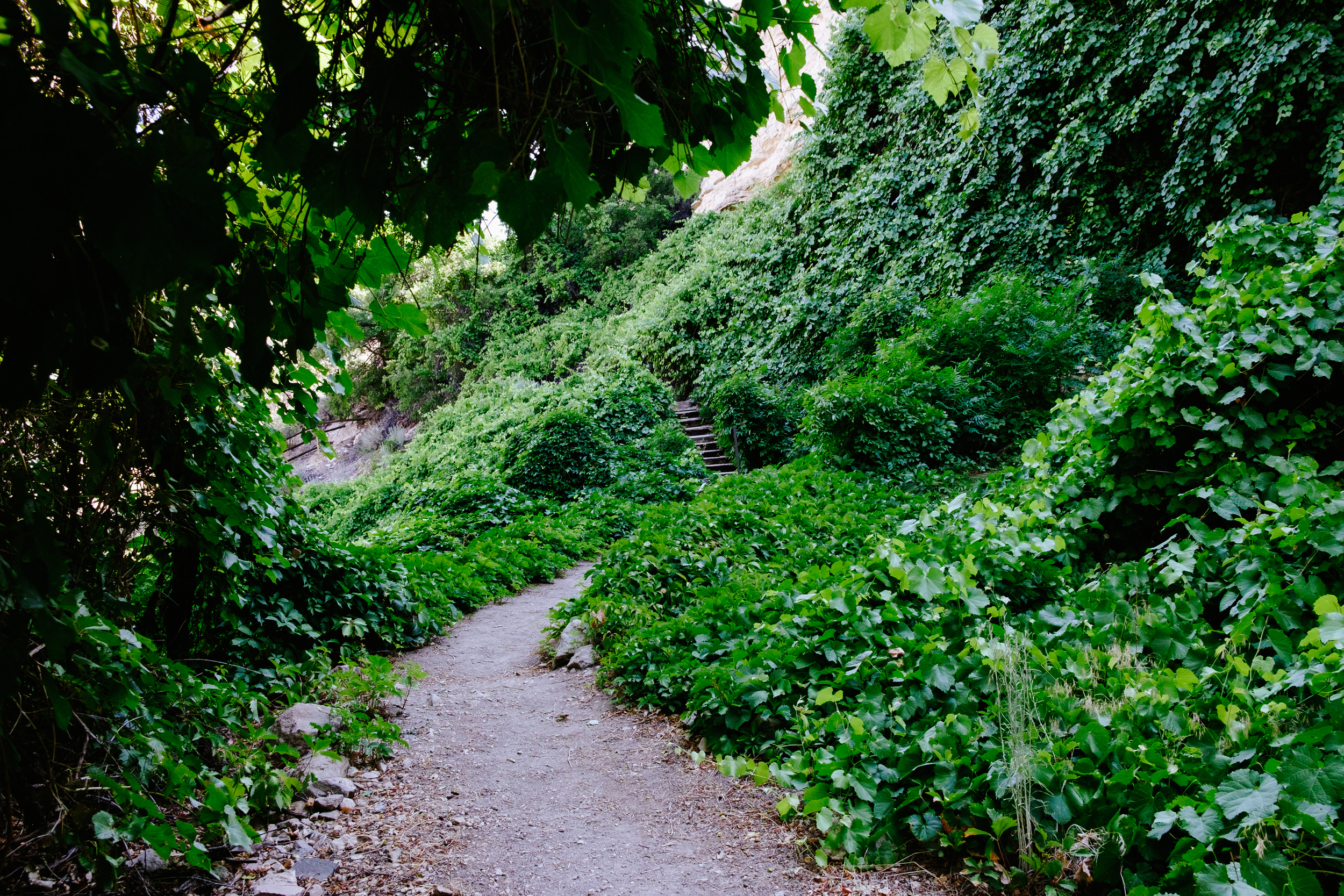 Lush green paths are carved out creating an awaises in the arid desert