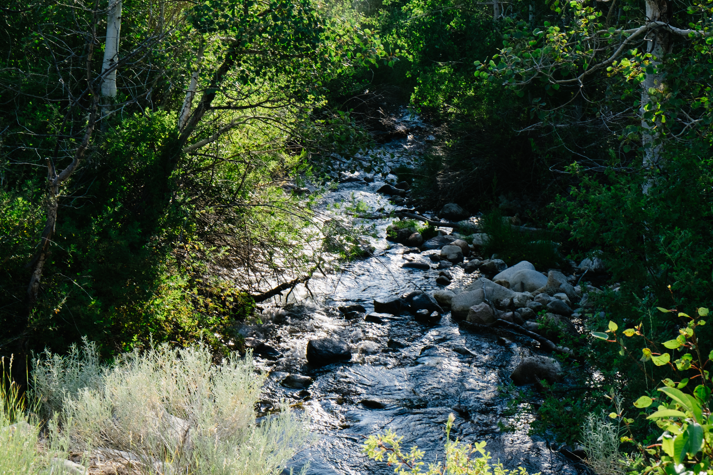 The beautiful Baker Creek that cuts right through Great Basin National Park.