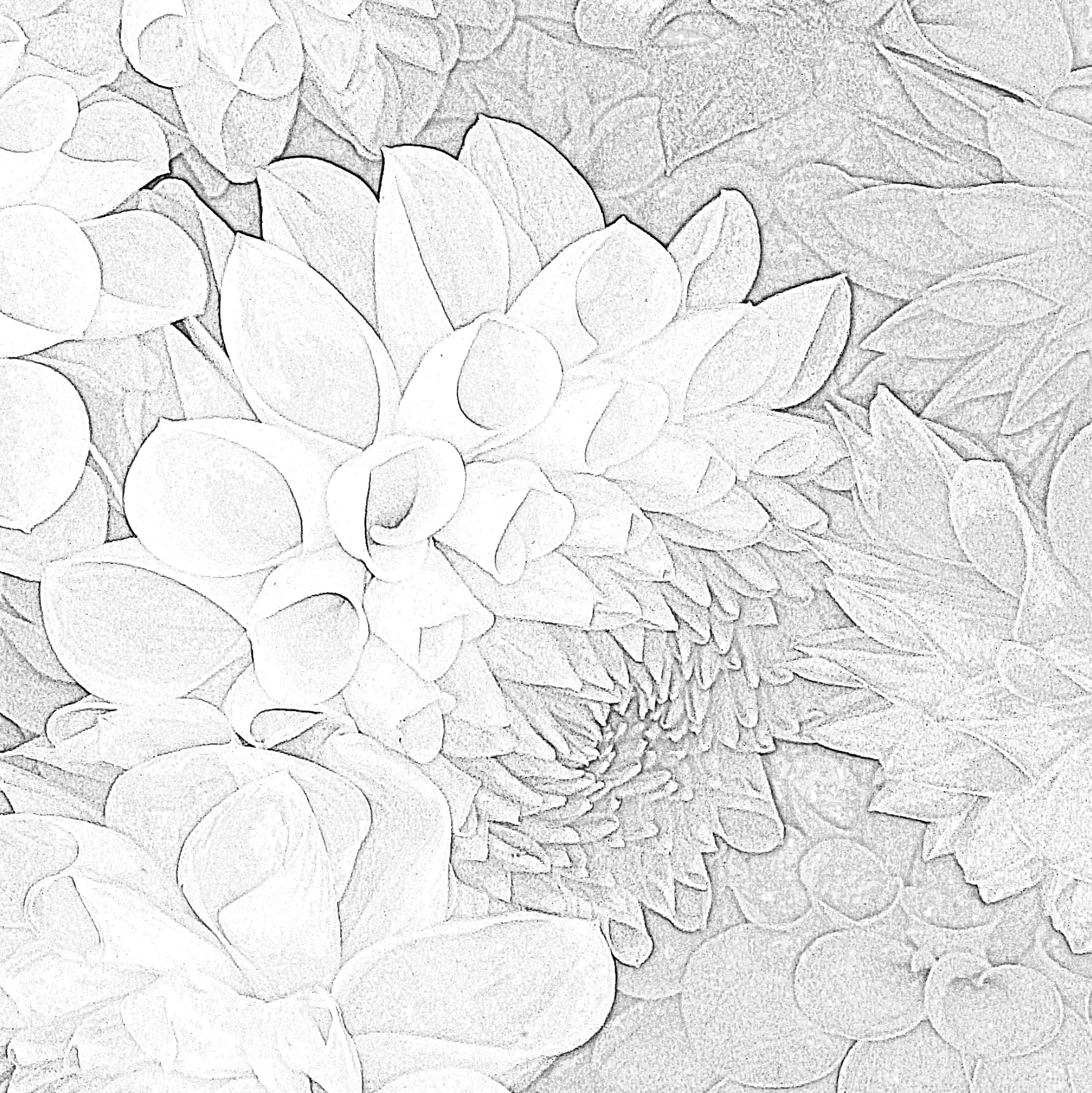Screen Shot 2018-06-04 at 11.18.06 AM.png