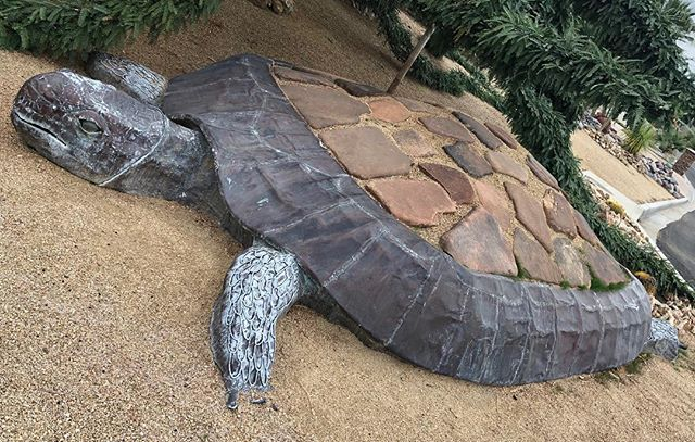 You can run into a turtle in many places, including the desert.