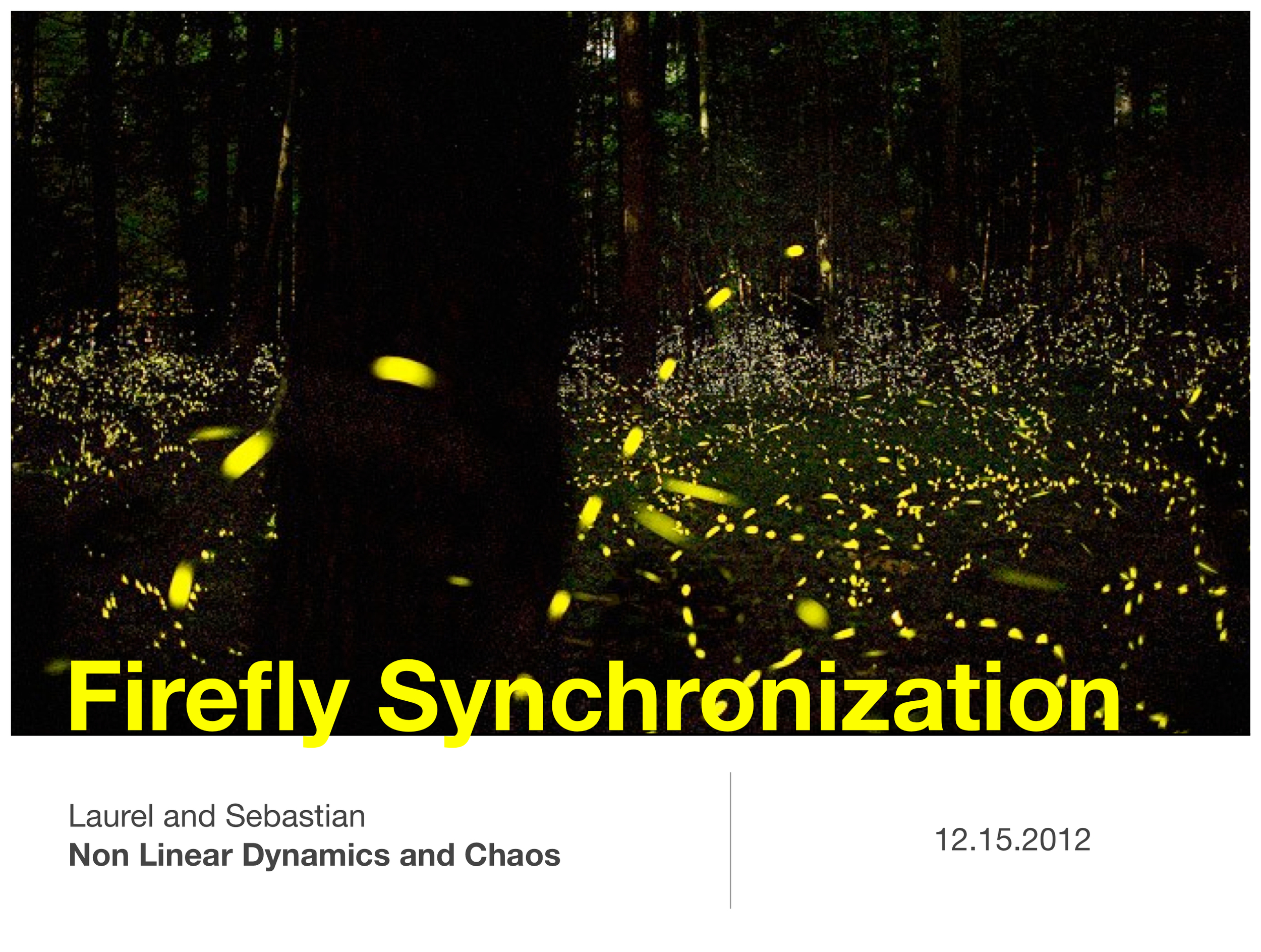 "Firefly Synchrony Research: Non-Linear Dynamics and Chaos Final Project  Olin College  Fall 2012 in Needham, MA   Implemented a commonly used model known as a ""biological clock"" to simulate firefly synchronization dynamics. System was an n-dimensional ODE, based on the phase and distance of fireflies nearby an individual. Effects of group's spacial distribution (e.g. 2 distinct groups versus 1 group or arranged in a pattern) was examined, along with contributing parameters to sync success. Final presentation slides linked in above image; note that all videos in presentation are inactive (PDF file)."