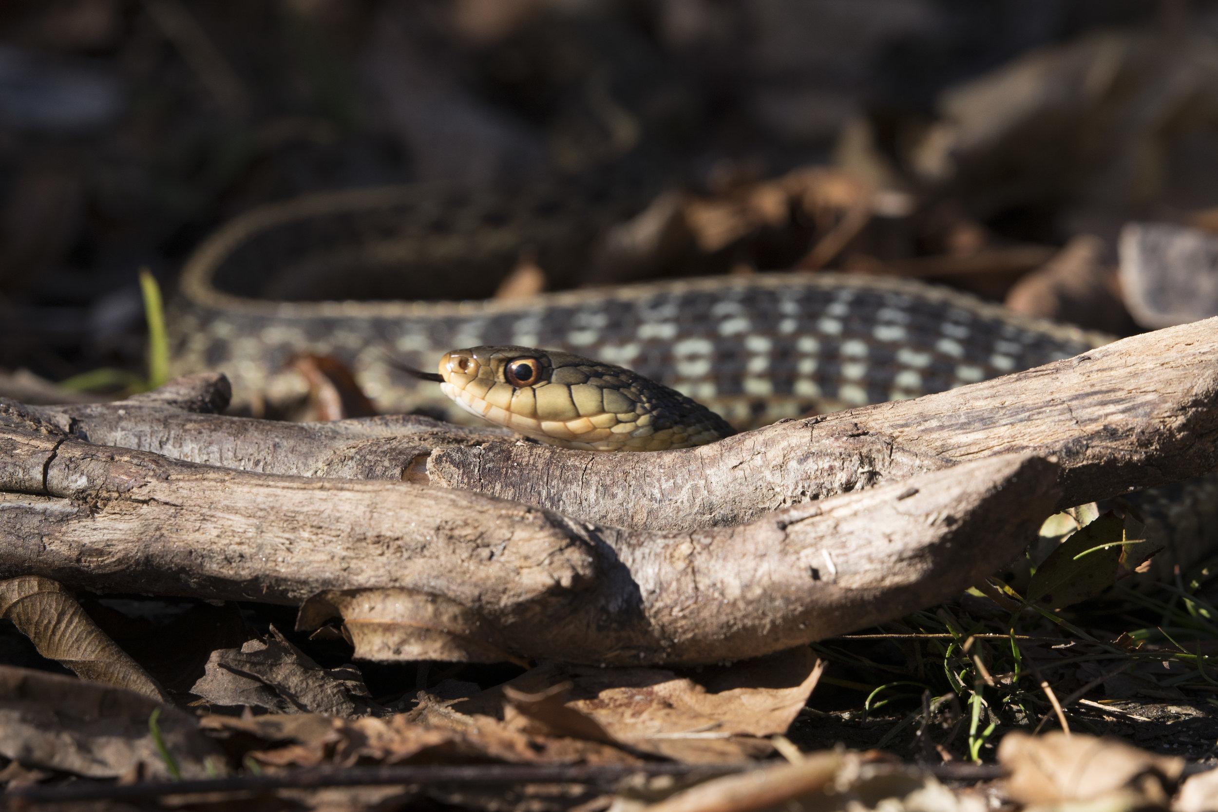 Occoquan National Wildlife Refuge, October 2018